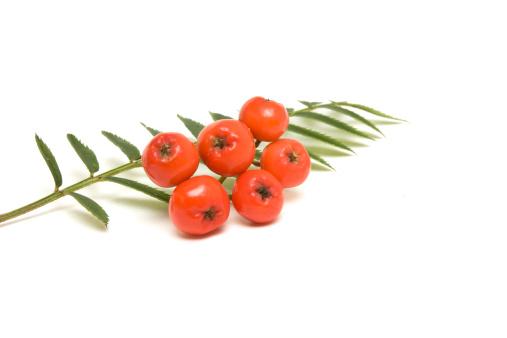 Rowanberry「Rowan berry」:スマホ壁紙(15)