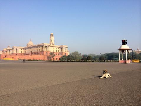 Delhi「India, New Delhi, Vijay Chowk, A stray dog sitting in the middle of road」:スマホ壁紙(17)