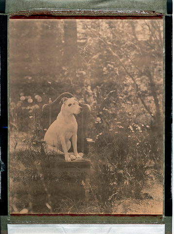 Sepia Toned「Dog Sits Quietly In A Chair」:スマホ壁紙(19)