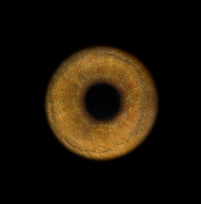 Eyesight「Lemur's eye, close-up」:スマホ壁紙(0)