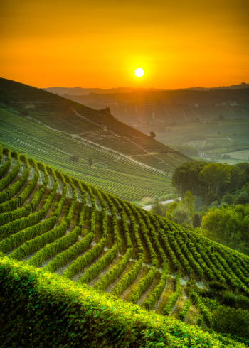 Piedmont - Italy「Sun on the vineyards」:スマホ壁紙(16)