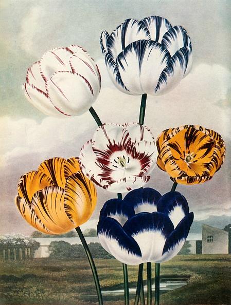 Petal「Tulips」:写真・画像(2)[壁紙.com]