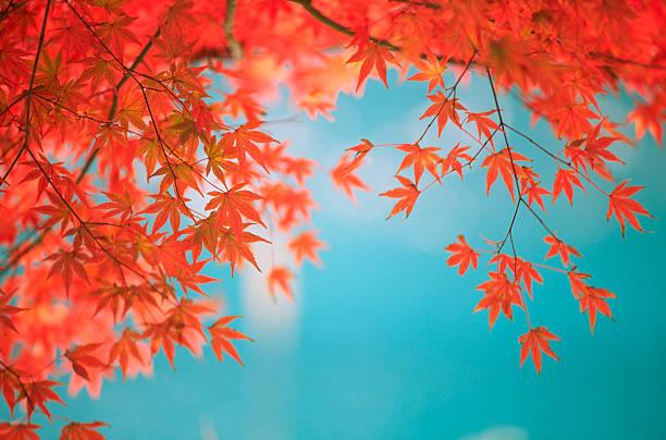 Autumn Orange Leaves against Green Lake:スマホ壁紙(壁紙.com)