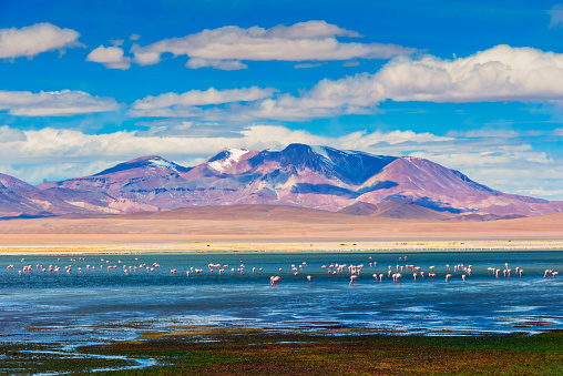 The Nature Conservancy「High-up mountains reserve - Andes plane - Altiplano andino - Tara salt lake reserve - Salar de Tara - Flamingo refuge」:スマホ壁紙(2)