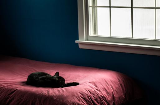 Duvet「Black House Cat Sleeping in Dark Bedroom Window Natural Light」:スマホ壁紙(14)