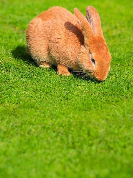 Rabbit on a meadow:スマホ壁紙(壁紙.com)