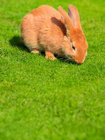 Easter Bunny「Rabbit on a meadow」:スマホ壁紙(2)