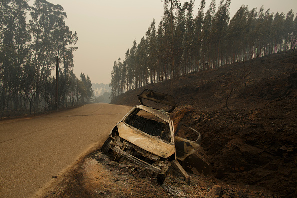 Burnt「Dozens Dead In Forest Fire In Portugal」:写真・画像(13)[壁紙.com]