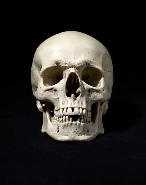 Anatomically correct medical model of the human skull:スマホ壁紙(壁紙.com)