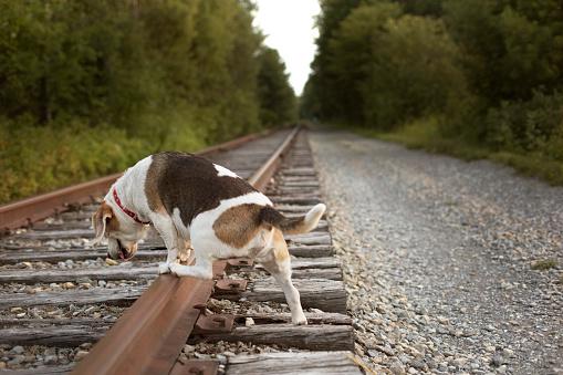 アディロンダック森林保護区「Dog Walking On Abandoned Adirondack Railroad In Beaver River, New York」:スマホ壁紙(16)