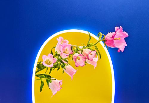 Floral Pattern「Neon Spring」:スマホ壁紙(19)