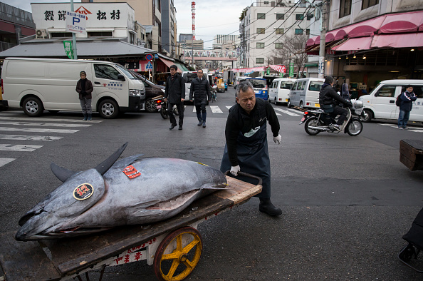 東京「Tsukiji Fish Market Holds First Auction For 2018」:写真・画像(9)[壁紙.com]