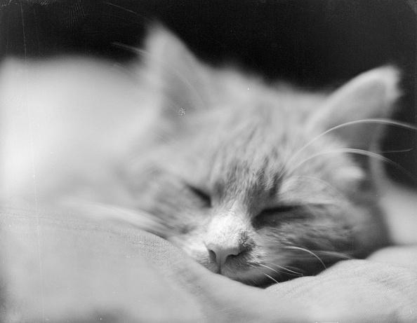 Chaloner Woods「Cat Tired」:写真・画像(14)[壁紙.com]