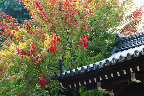 Chan Buddhism「Japan, Kyoto Prefecture, Tofukuji Temple, autumn」:スマホ壁紙(6)