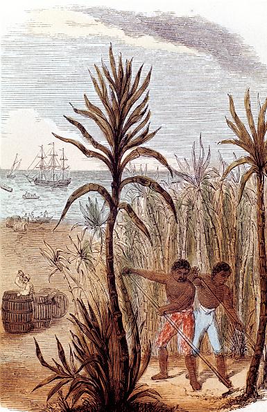 Sugar Cane「Slaves cultivating sugar cane in the West Indies, 1852.」:写真・画像(3)[壁紙.com]