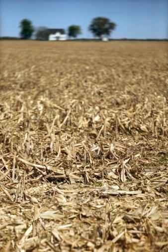 Hair Stubble「Dry corn field」:スマホ壁紙(12)
