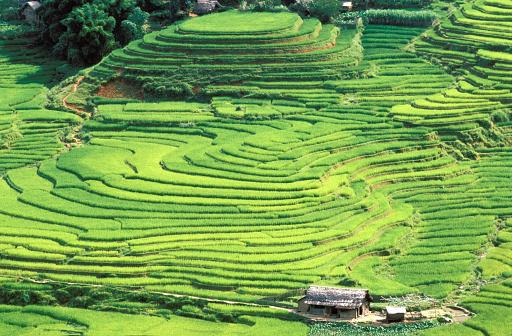Vietnam「Rice fields in Sapa region, North Vietnam」:スマホ壁紙(8)