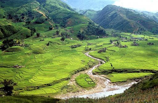 Vietnam「Rice fields in Sapa region, North Vietnam」:スマホ壁紙(9)