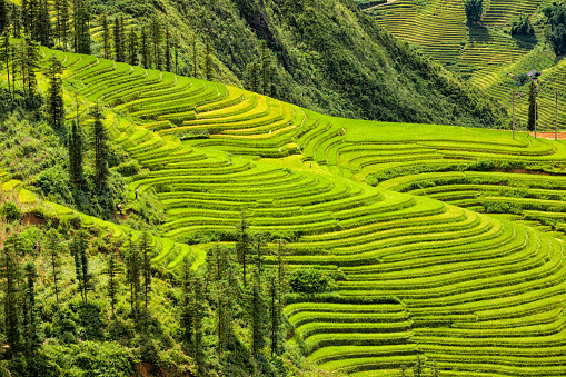 Farm「Rice fields near Sapa town in North Vietnam」:スマホ壁紙(11)