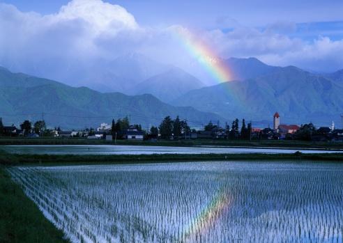 虹「Rice fields and rainbow」:スマホ壁紙(12)
