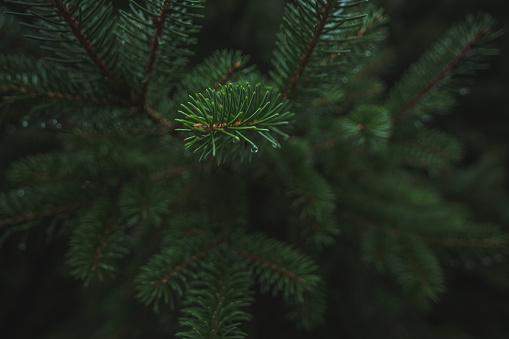Needle - Plant Part「Pine Branches」:スマホ壁紙(17)
