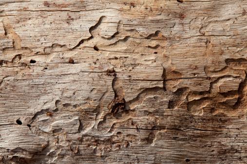 Log「Close-up shot of wood grain pattern」:スマホ壁紙(9)