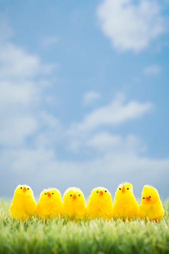 イースター「Toy chicks on grass」:スマホ壁紙(16)