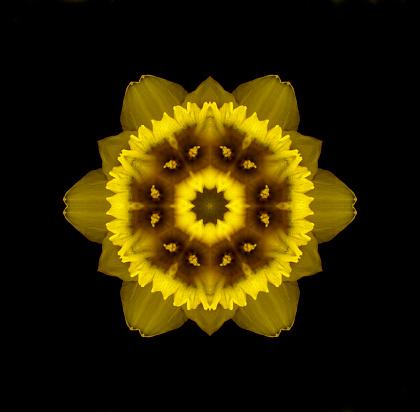 水仙「Daffodil Mandala」:スマホ壁紙(17)