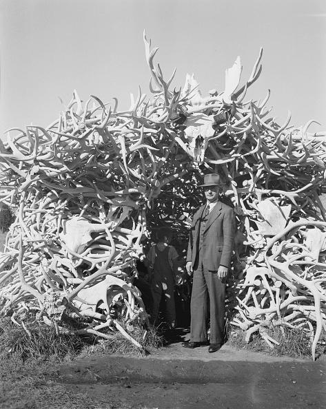 Animal Body Part「Hut Built Of Antlers」:写真・画像(7)[壁紙.com]