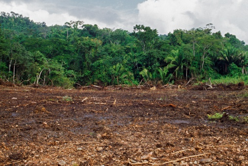 Deforestation「Tropical Forest Cleared By Machinery, Belize」:スマホ壁紙(1)