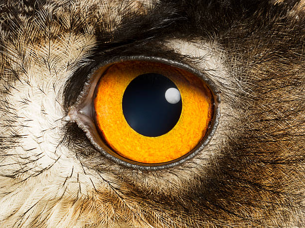 Eye of an Eagle Owl, close up:スマホ壁紙(壁紙.com)