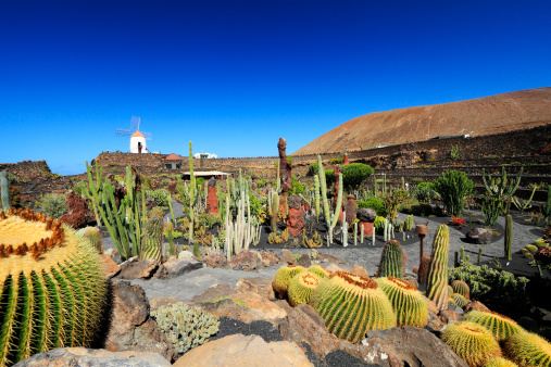 Atlantic Islands「Jardin de Cactus」:スマホ壁紙(4)