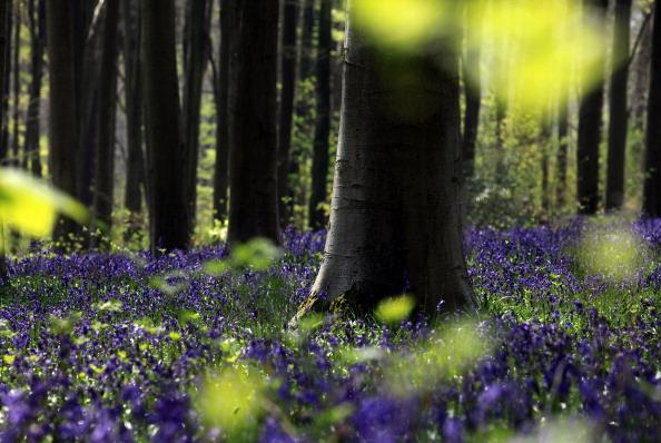 Springtime「Bluebells Bloom In The Spring Sunshine」:写真・画像(6)[壁紙.com]