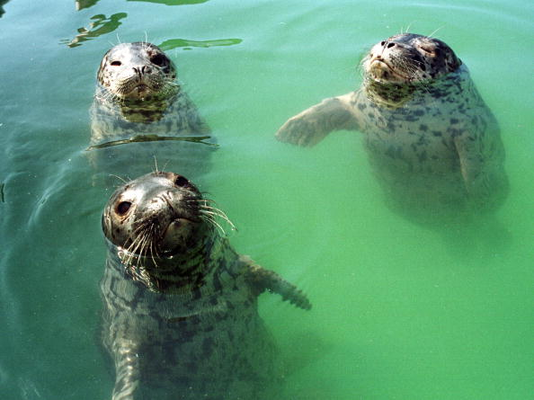 Killer Whale「Marine Mammal Rescue Site」:写真・画像(11)[壁紙.com]