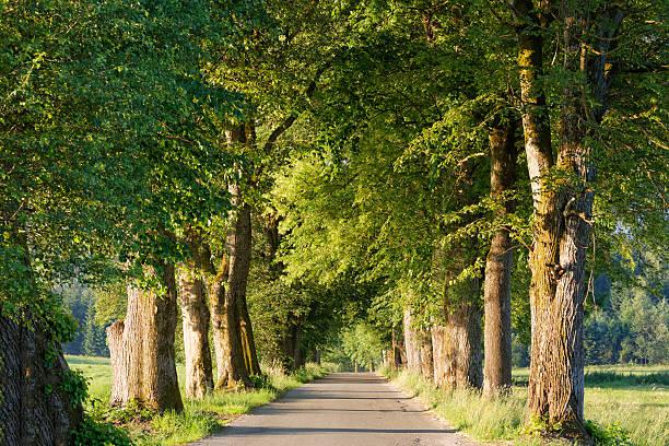 Germany, Upper Bavaria, Bad Heilbrunn, Nantesbuch, tree-lined road:スマホ壁紙(壁紙.com)