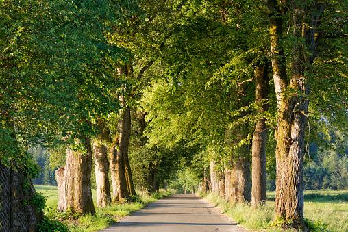 Avenue「Germany, Upper Bavaria, Bad Heilbrunn, Nantesbuch, tree-lined road」:スマホ壁紙(10)