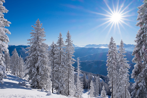 Bavarian Prealps「Germany, Upper Bavaria, Lenggries, snow-covered spruces at Brauneck」:スマホ壁紙(2)