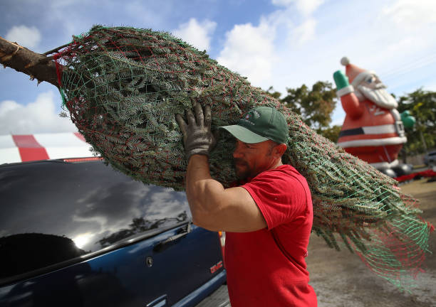Tree「National Christmas Tree Shortage Leads To Higher Prices And Less Inventory」:写真・画像(12)[壁紙.com]