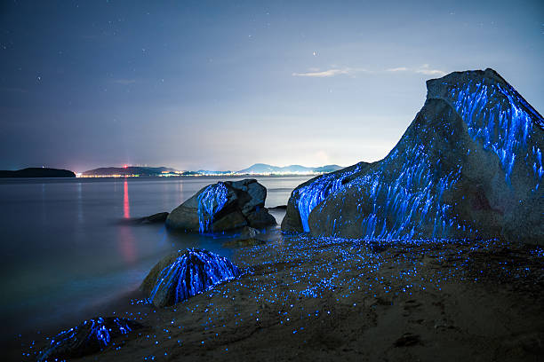 Large stones appear to weep on the beach:スマホ壁紙(壁紙.com)
