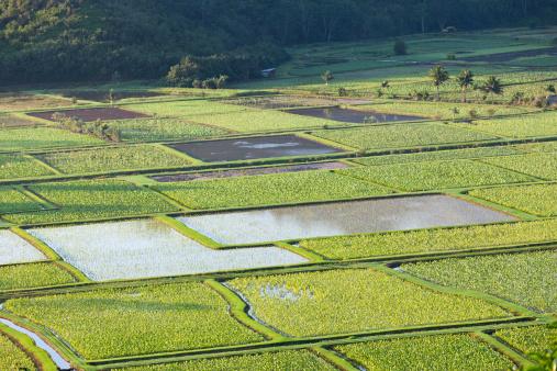 Frond「Hanalei Valley in Kauai」:スマホ壁紙(3)