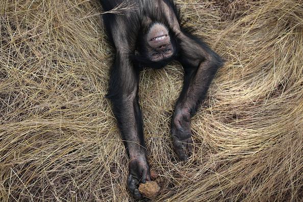 Grass「Rehabilitating Chimpanzees - A Labour Of Love」:写真・画像(1)[壁紙.com]