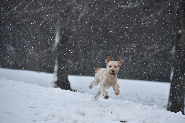 Snow「First Snow of Winter Hits Northern Ireland」:写真・画像(3)[壁紙.com]