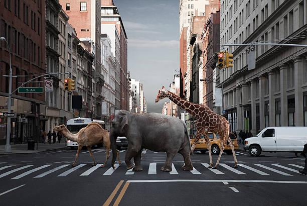 Camel, elephant and giraffe crossing city street:スマホ壁紙(壁紙.com)
