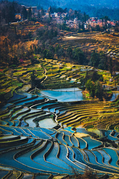 Yuanyang Rice Terrace Field during afternoon from top angle vertical view with village as background:スマホ壁紙(壁紙.com)