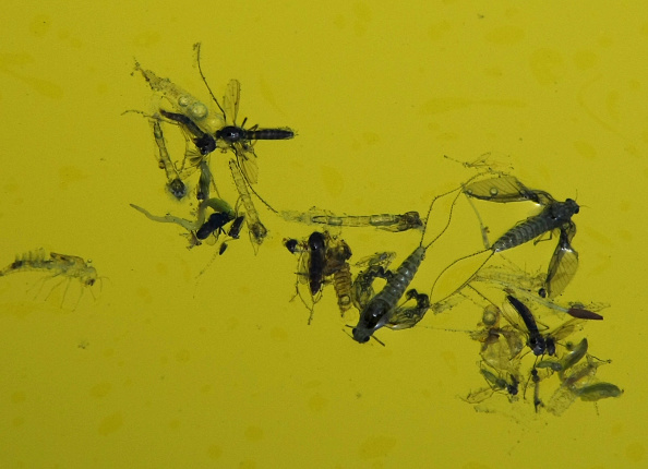 Insect「Mosquitoes Infest Dormant Pools Of Foreclosed Homes」:写真・画像(15)[壁紙.com]