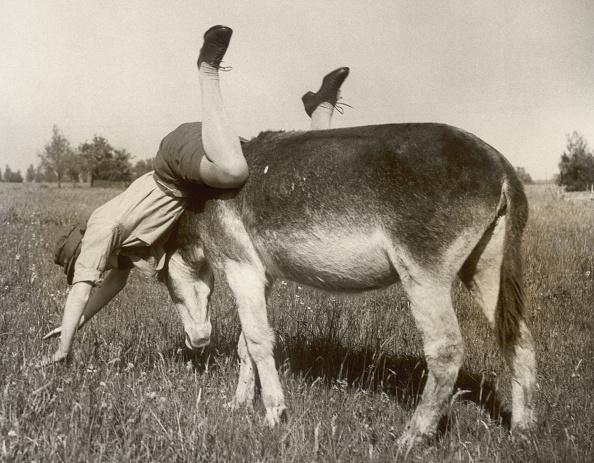 Misfortune「Donkey's Revenge」:写真・画像(12)[壁紙.com]