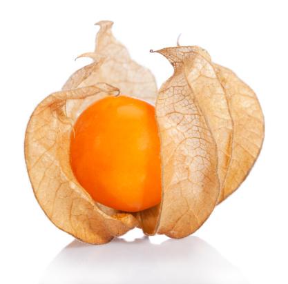 Chinese Lantern「Physalis fruit (P. peruviana)」:スマホ壁紙(19)