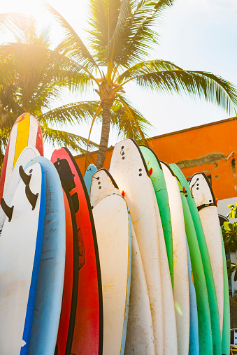 Sayulita「Surfboards under palm tree」:スマホ壁紙(11)