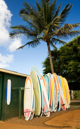 Palm「Surfboards lined up on rack」:スマホ壁紙(9)