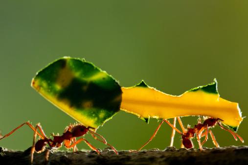 Effort「Leafcutter Ants, Costa Rica」:スマホ壁紙(7)